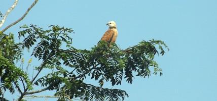 Wagnão em Manaus